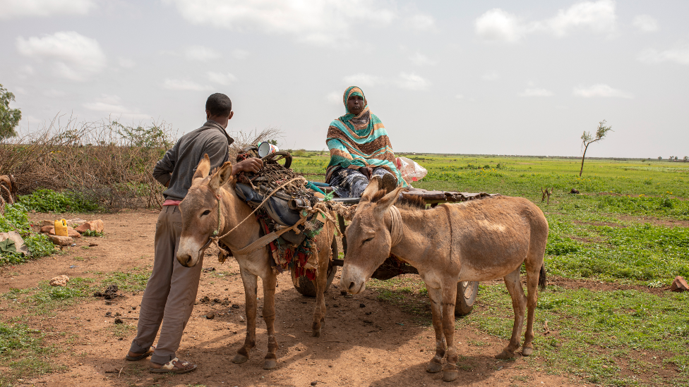 Farmers with donkey on the site of the former refugee camp at Hartisheik, Ethiopia